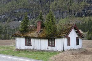 Zelená střecha svépomocí