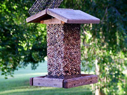 Stavba ptačího krmítka