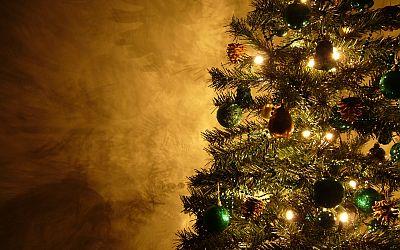 Jaký vánoční stromeček?