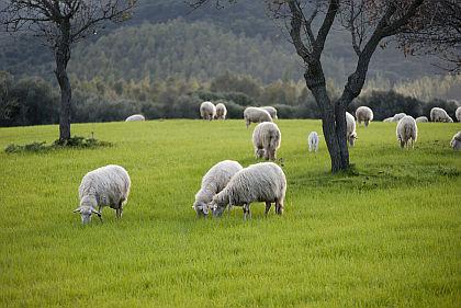 izolace ovci vlna