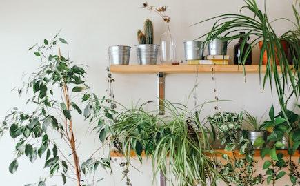 pokojove-rostliny