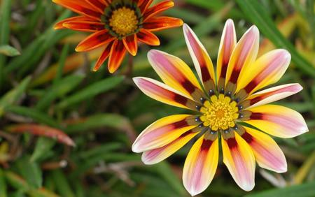 stresni zahrada