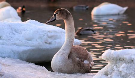 Ptáci ve volné přírodě v zimě