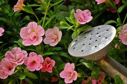 Zahradníkovo léto