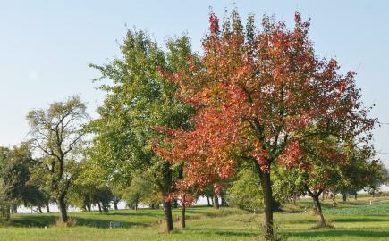 ovocny strom_podzim