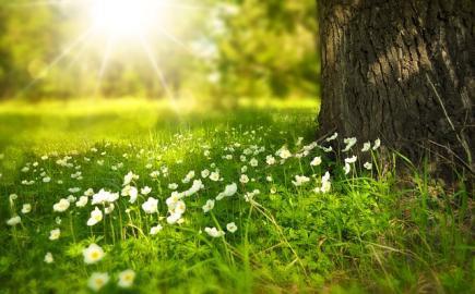 jaro priroda