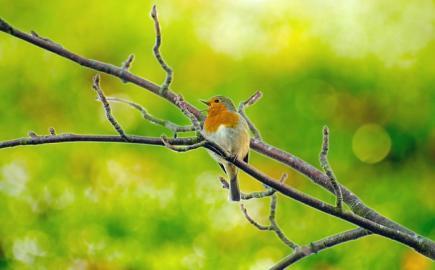 ptaci zpev