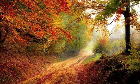 podzim cesta
