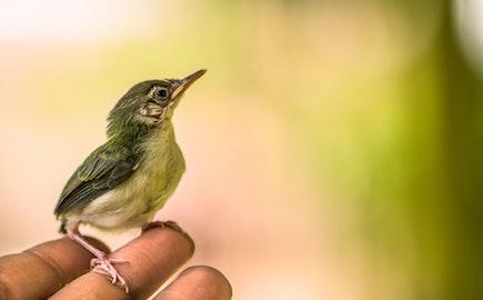 ptace