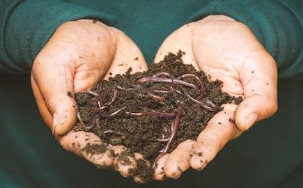 zizaly_kompost_hlina